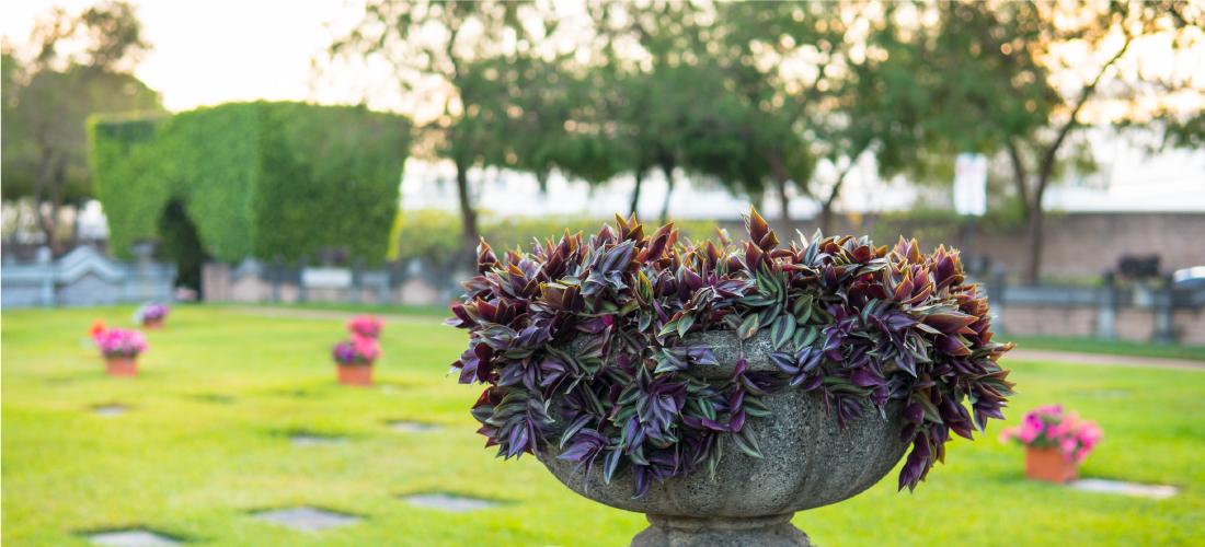 Cementerio 7